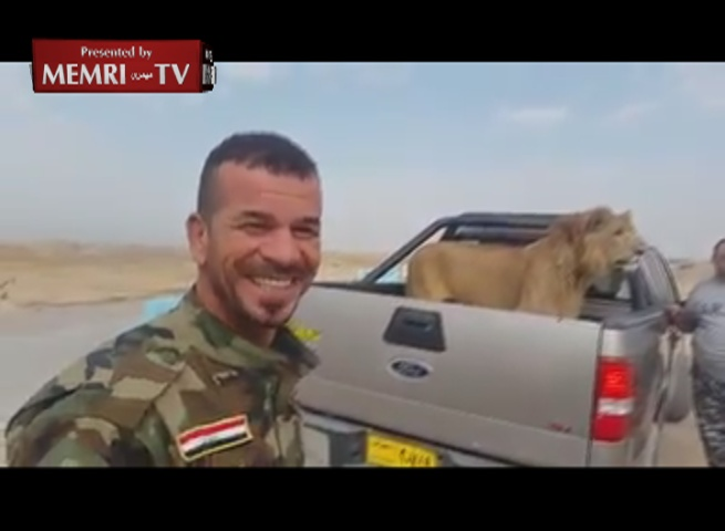 Iraqi Militia Stops Lion at Checkpoint